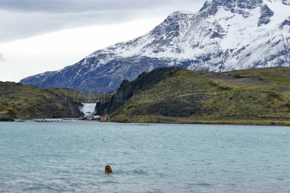 Patagonie Puerto Natales Parc National Torres Del Paine