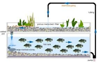 About Aquaponics System Assignment Point
