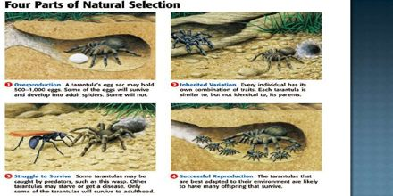 Natural Selection In Action Assignment Point