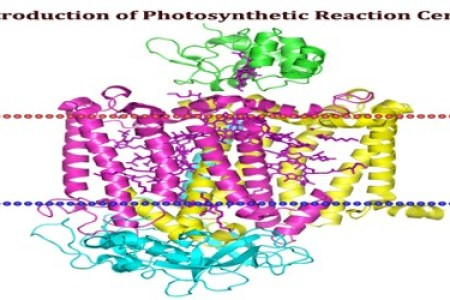 Photosynthesis reaction hd images wallpaper for downloads easy primary processes in the photosynthetic reaction center holten figure wild type reaction center and photochemical events photosynthesis the light reactions ccuart Choice Image