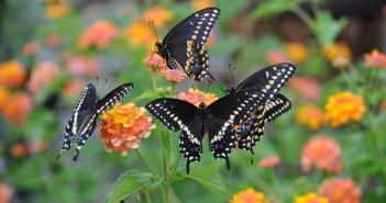 jardim de flores com borboletas