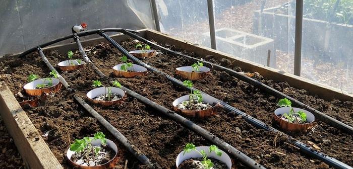 plantas com fita de cobre ao redor