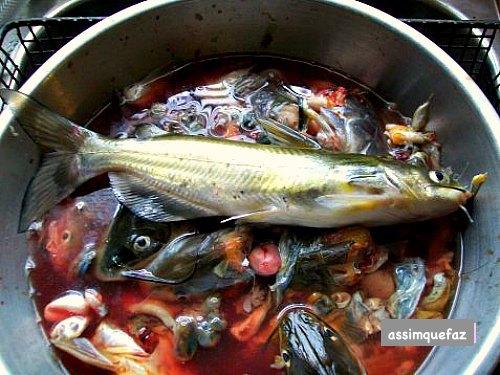 peixes no barril