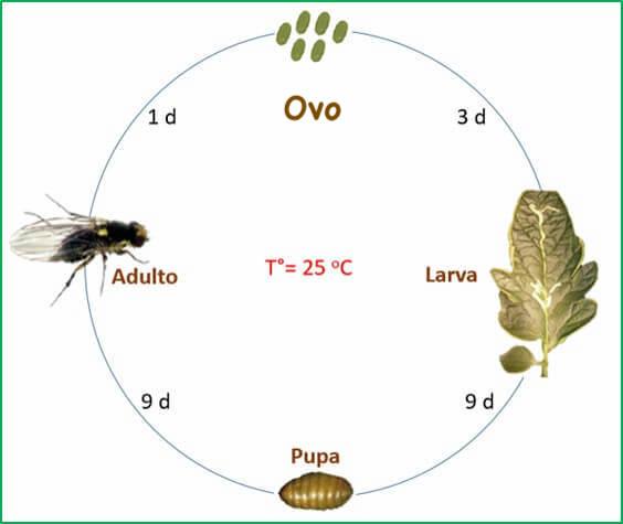ciclo biológico