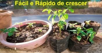vegetais faceis de plantar