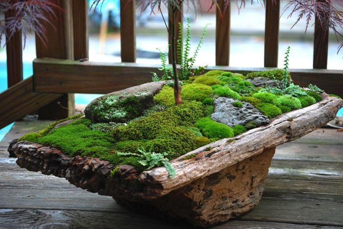 jardim de musgo sobre tronco
