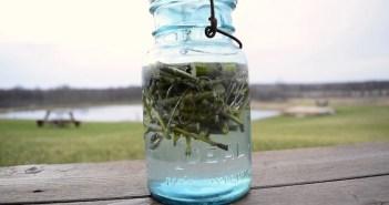 água de salgueiro