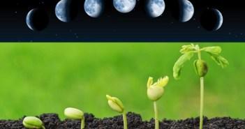 fases da lua germinação