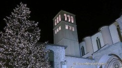 Assisi, accensione e benedizione albero e presepe terremotati