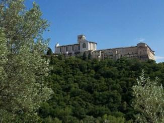 Le Stelle cadenti al Bosco di San Francesco
