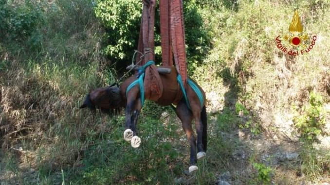 Vigili del fuoco salvano cavallo, ma rischia di essere abbattuto