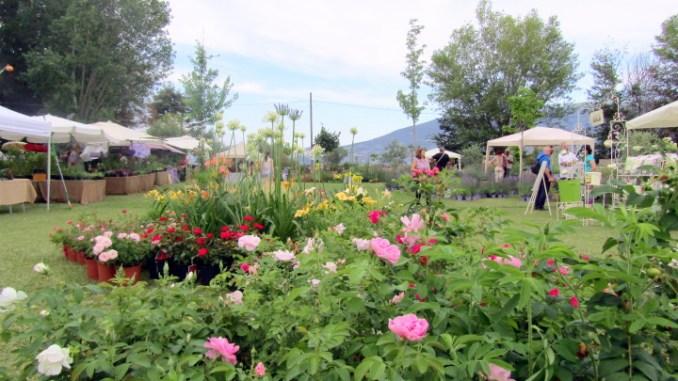 Assisi, bando di gara su verde pubblico