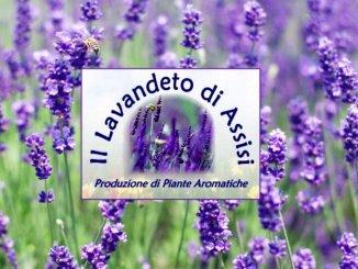 Al Lavandeto di Castelnuovo di Assisi è possibile scoprire piantine rare e insolite