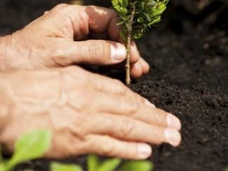 Festa degli alberi, il calendario delle piantumazioni ad Assisi