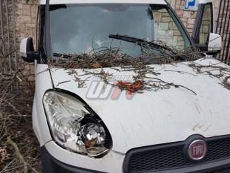 Albero cade ad Assisi, tragedia sfiorata in via Umberto I, vicino alla Daca