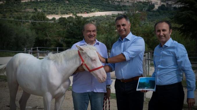Via Lattea la Cavallina bianca di Assisi e La scuderia dei miracoli