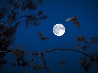 Pipistrelli al Bosco di San Francesco, una notte con loro