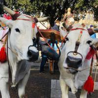 Piatto di Sant'Antonio, il corteo e la benedizione degli animali   le foto