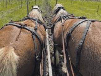 Assisi, attività agricola con gli animali organizzata da Eponalia