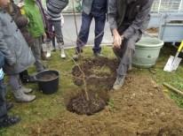 cecl-2014-plantatin-arbre-laicite-dden-0004