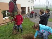 cecl-automne-2014-plantation-noisetier0007