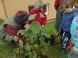 cecl-automne-2014-plantation-noisetier0009
