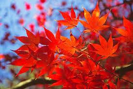 23 Settembre arriva l'Equinozio d'autunno…Riti propiziatori