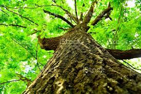 Due cose che forse non sapete degli alberi e la DENDROTERAPIA !
