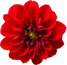 Benedizioni di energia femminili (Fiore Rosso e Terra Yoni) gratis per noi sorelle