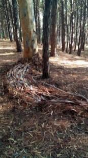 """""""Passaggio"""" installazione in pino ed eucalipto,Parco Nazionale del Cilento estate 2017"""