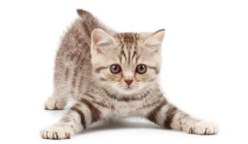 Allergia al gatto, cos'è e come comportarsi