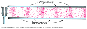 Compressions and Rarefactions