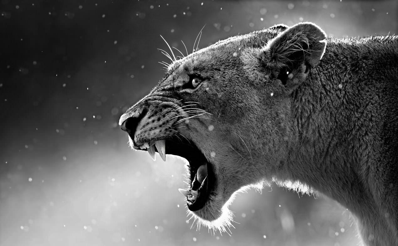 lioness_3-wallpaper-1280x800