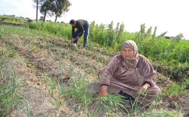 الملايين من النساء العاملات في الريف المصري مُعرَّضات لخطر تغيّر المناخ
