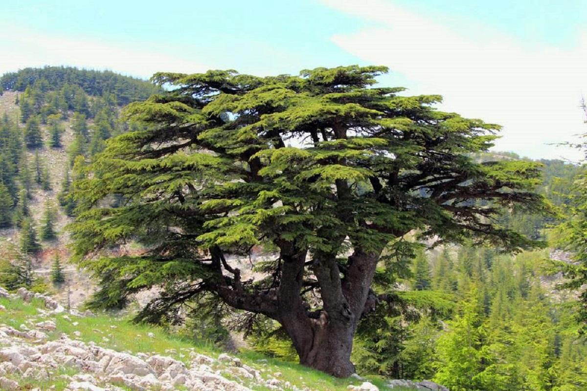 لبنانُ بين المدائنِ الفينيقيّةِ والإمارة