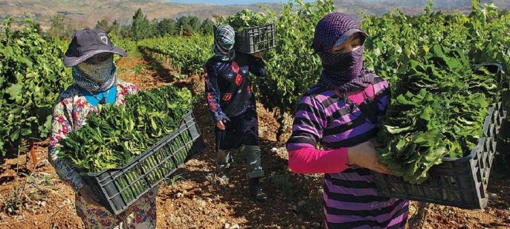 إنحسار الحرب في سوريا يُساهم في ضمان الأمن الغذائي للمشرق العربي