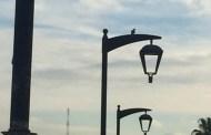 ذلك العـصفورُ الصباحـيُّ عـلى مصباح كورنيش المنارة