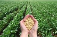 كيف يُمكن للزراعة البيولوجية أن تساعد على توسيع قطاع الزراعة في المغرب