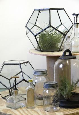 honeycomb terrarium from terrain