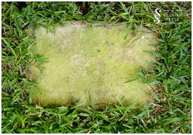 mossy stepping stone