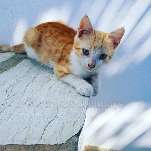 kitten cyclades greece