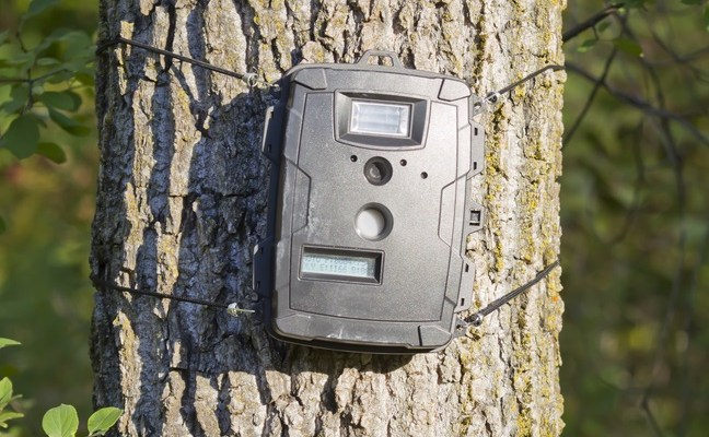 Best Hunting Trail Cameras: Reviews and Guide for 2018 | A ...