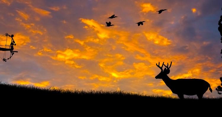 best broadheads for deer hunting reviews