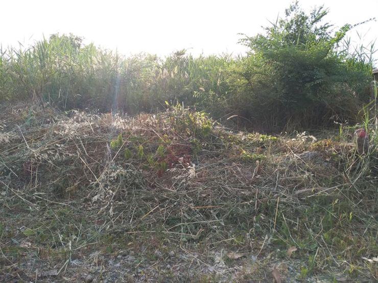 Λάρισα: Τρόμος για μικρό παιδί στα Μεσάγγαλα – Μεγάλο φίδι δίπλα του την ώρα που έπαιζε – Ζούγκλα η περιοχή (φωτο)