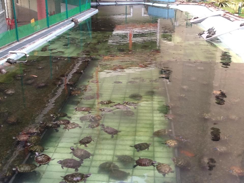 Kong Meng San Phor Kark See Monastery Turtle Pond