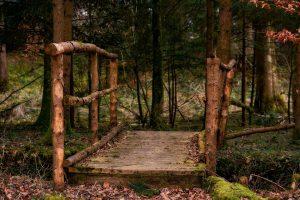 skog-bro