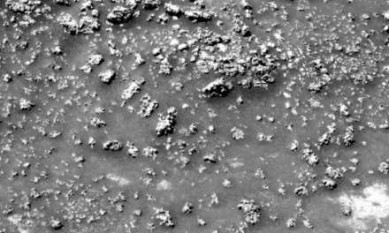 Estas «coliflores» podrían ser una señal de vida en Marte