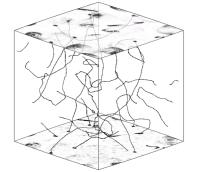 Gesimuleerde kosmische snaren