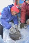 Meteoriet van 18 kilo gevonden op Antarctica