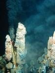 Organisme ontdekt dat leeft van raketbrandstof